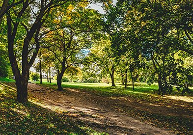Pollard Park - Best Outdoor Places To Go in Chesterfield Township